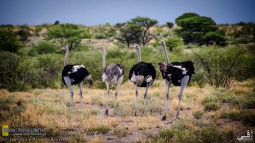 20190411-154520 TransAfrica - Botswana
