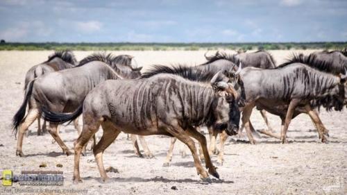 20190412-102825 TransAfrica - Botswana